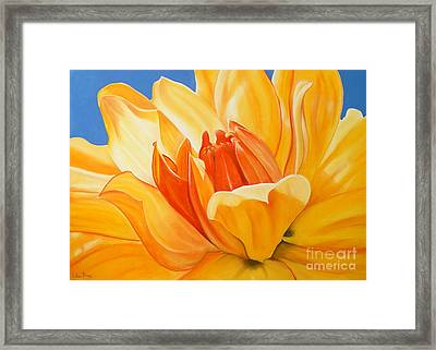 Saffron Splendour Framed Print by Colleen Brown