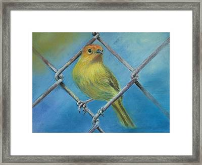 Safron Finch Framed Print