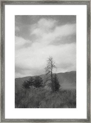 Sage And Tree Sketch Black And White Framed Print