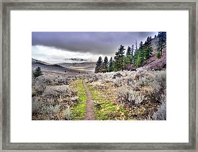 Sage Brush Along The White Lake Trail Framed Print