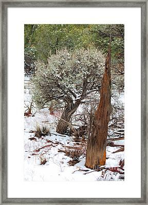 Sage Bush Grand Canyon Framed Print by Donna Greene