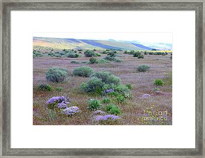 Sagebrush And Wildflowers Framed Print by Carol Groenen
