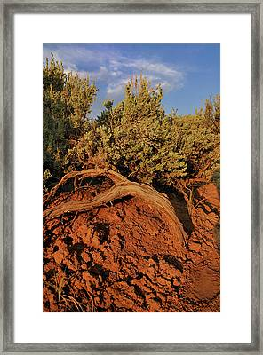 Sagebrush At Sunset Framed Print