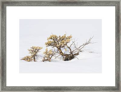 Sagebrush Bonsai In Snow Framed Print by Shelley Dennis