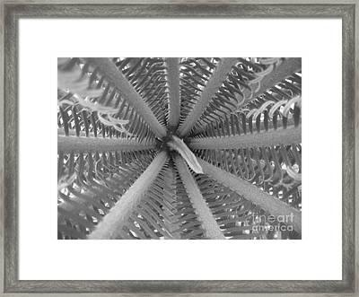 Sago Center Framed Print by WaLdEmAr BoRrErO