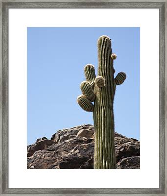 Saguaro 1 Framed Print