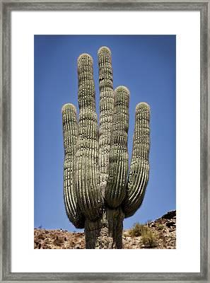 Saguaro 2 Framed Print
