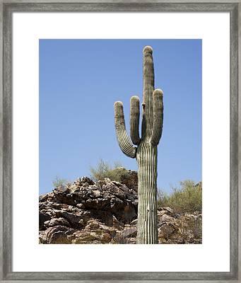 Saguaro 3 Framed Print