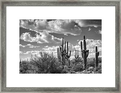 Framed Print featuring the photograph Saguaro And Blue Skies Ahead In Black And White  by Saija Lehtonen