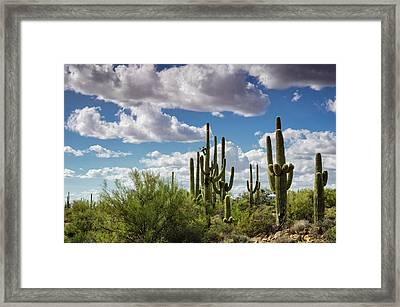 Framed Print featuring the photograph Saguaro And Blue Skies Ahead  by Saija Lehtonen
