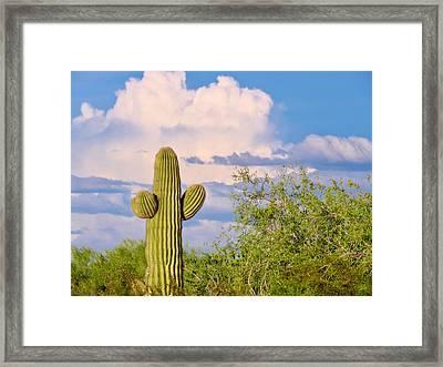 Saguaro And Mesquite In Monsoon Season Framed Print