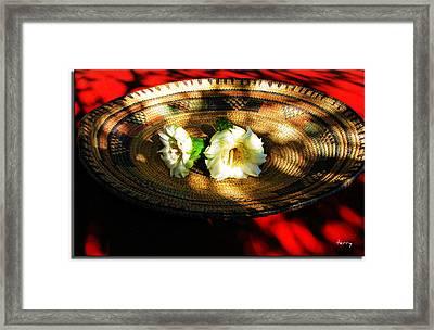 Saguaro Blossoms Framed Print