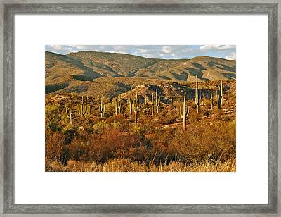 Saguaro Cactus - A Very Unusual Looking Tree Of The Desert Framed Print by Christine Till