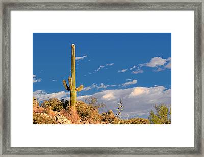 Saguaro Cactus - Symbol Of The American West Framed Print by Christine Till