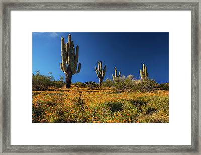 Framed Print featuring the photograph Saguaro Cactus And Poppies Arizona by Dave Dilli