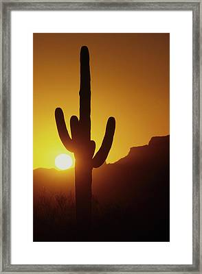 Saguaro Cactus And Sunset Framed Print