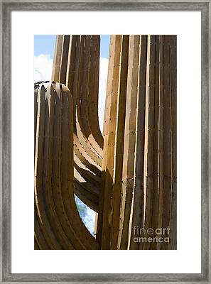 Saguaro Cactus In Steel Framed Print by Tim Hightower