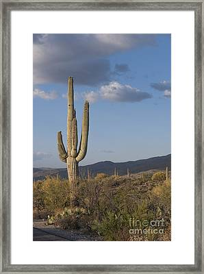 Saguaro Cactus Framed Print by Juli Scalzi