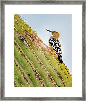 Saguaro Cactus With Northern Flicker Framed Print by LeeAnn McLaneGoetz McLaneGoetzStudioLLCcom