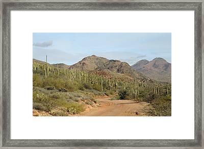 Saguaro Central Framed Print by Gordon Beck