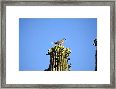 Saguaro Dove 1 Framed Print