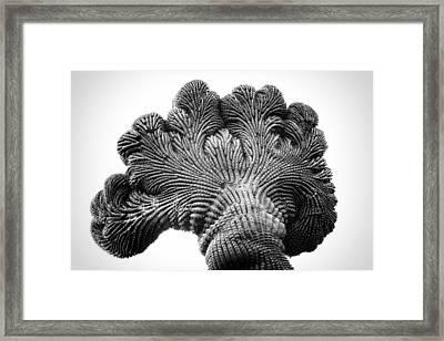 Saguaro Elephant Ear Framed Print by Rusty Childress