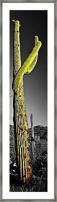 Saguaro Gestures Framed Print by Jerry Kalman