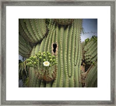 Saguaro In Bloom Framed Print