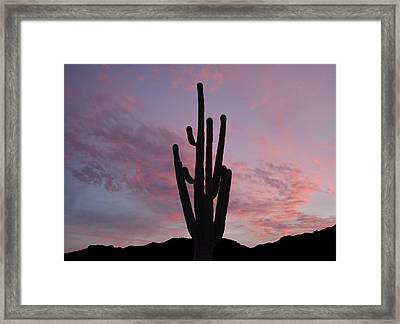 Saguaro Sunset  Framed Print by Aimee L Maher Photography and Art Visit ALMGallerydotcom