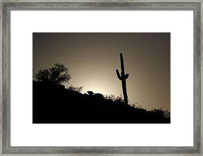 Saguaro Sunset Framed Print by David Yunker