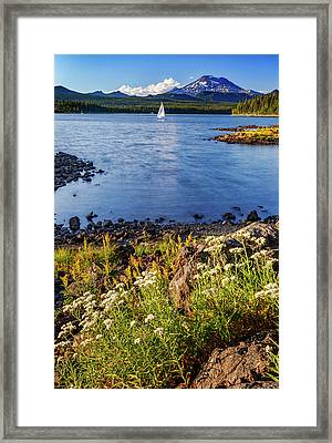 Sail Away Framed Print by Cat Connor