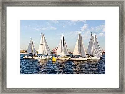 Sail Race Framed Print by Tom Dowd
