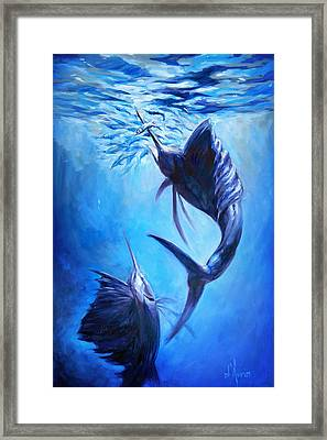 Sailfish And Ballyhoo Framed Print by Tom Dauria