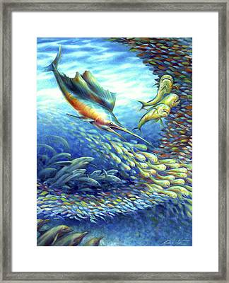 Sailfish Plunders Baitball II - Sharks And Dolphin Fish Framed Print by Nancy Tilles