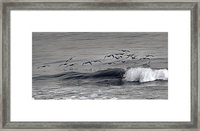Sailing Along Framed Print by Betsy Knapp