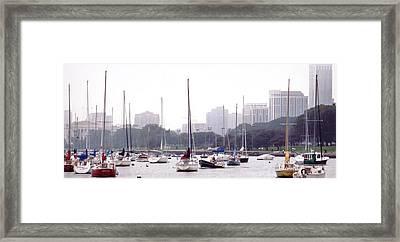 Sailing Amongst Friends Framed Print by Jackie Bodnar