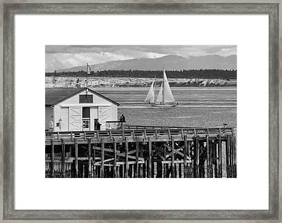 Sailing At Neah Bay Black And White Framed Print