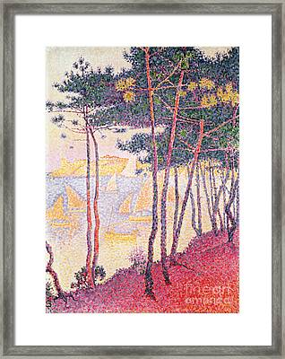 Sailing Boats And Pine Trees Framed Print
