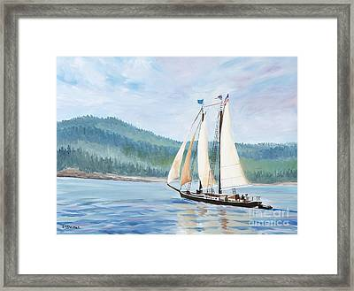 Sailing Into Castine Harbor Framed Print by Stella Sherman