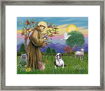 Saint Francis Blesses A Brown And White English Bulldog Framed Print