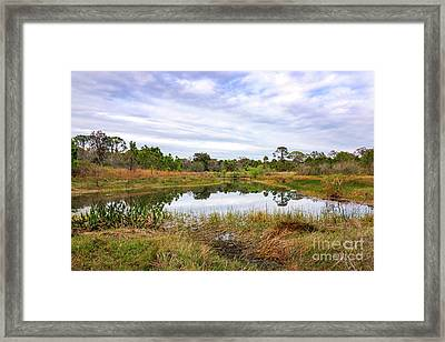 Saint Lucie Nature II Framed Print by Liesl Marelli
