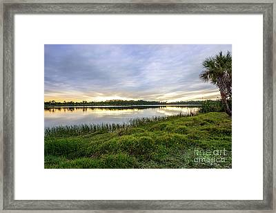 Saint Lucie Nature  Framed Print by Liesl Marelli