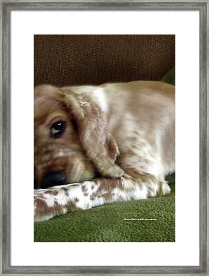 Saint Shaggy Art Photograph  6 Framed Print