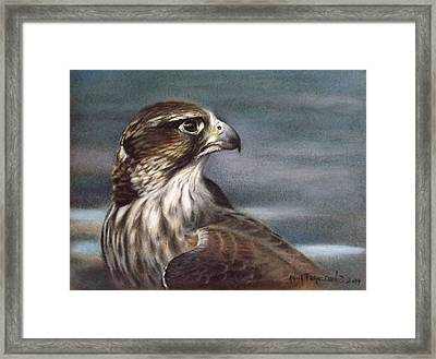 Saker Falcon Framed Print by Anna Franceova