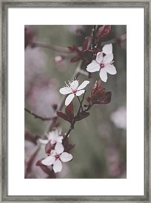 Sakura #098 Framed Print