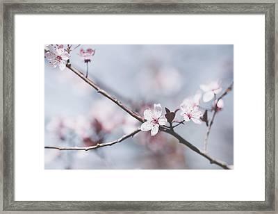 Sakura #189 Framed Print