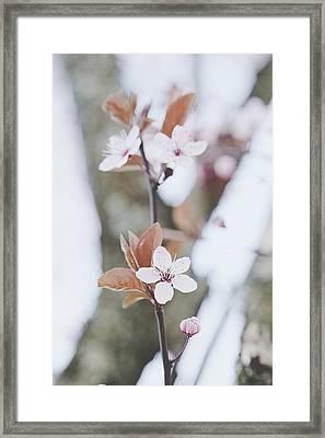 Sakura #234 Framed Print