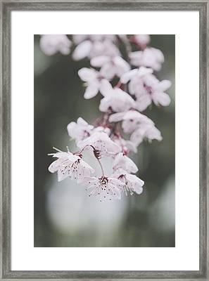 Sakura #253 Framed Print
