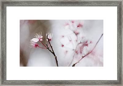Sakura #290 Framed Print