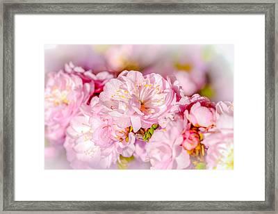 Framed Print featuring the photograph Sakura Cherry Flower - Wedding Bouquet by Alexander Senin